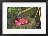 Framed Water Basin Flowers, Portland Japanese Garden, Oregon