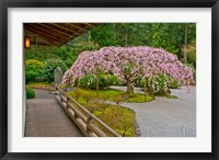 Framed Weeping Cherry Tree, Portland Japanese Garden, Oregon
