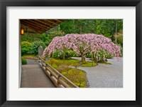 Framed Weeping Cherry Tree, Portland Japanese Garden, Oregon