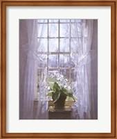 Framed Cape Primrose