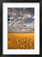 Framed Summer Morning Wheat Fields, South Dakota