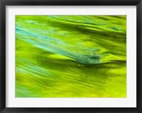 Framed Spring Reflection On The Little Pigeon River
