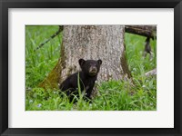 Framed Black Bear Cub Next To A Tree