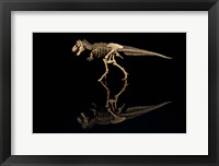 Framed T-Rex Skeleton Replica Reflection
