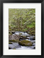 Framed Dogwood Trees Above The Middle Prong Of Little River