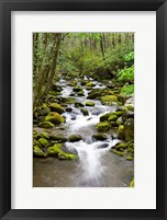 Framed Roaring Fork In Spring, Tennessee