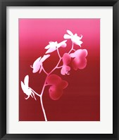 Framed Summer Orchid