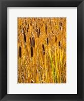 Framed Cattails In A Field, Utah