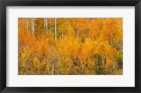 Framed Autumn Forest Landscape Of The Manti-La Sal National Forest, Utah