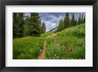 Framed Wildflowers In The Albion Basin, Utah