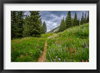 Framed Wildflowers In The Albion Basin, Utah