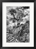 Framed Desert Juniper Tree Growing Out Of A Canyon Wall, Utah (BW)