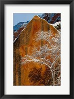 Framed Snow Covered Tree In Front Of Red Rock Boulder, Utah