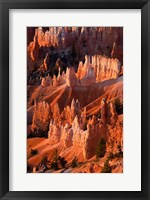 Framed Sunrise Point Hoodoos In Bryce Canyon National Park, Utah