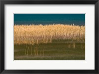 Framed Grasses Blowing In The Breeze Along The Shore Of Bear Lake, Utah