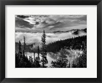 Framed Olympic National Park, Washington (BW)