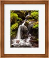 Framed Creek In Sol Duc Valley, Washington