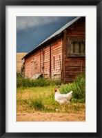 Framed Chicken Near A Coop