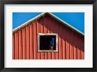Framed Peacock In A Barn Window