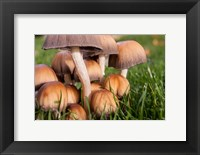 Framed Cluster Of Mushrooms