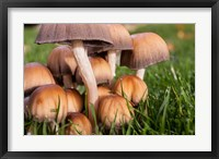 Framed Cluster Of Mushrooms