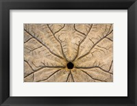 Framed Design On The Bottom Of A Sand Dollar Shell