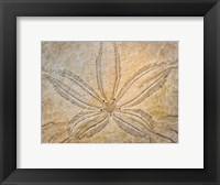 Framed Design On The Top Of A Sand Dollar Shell