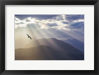 Framed Seagull And God Rays Over The Olympic Mountains