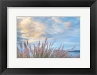 Framed Scenic View Of Pennisetum Ornamental Grasses