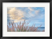 Framed Scenic View Of Pennisetum Ornamental Grasses