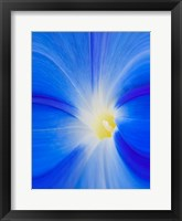 Framed Close-Up Of A Morning Glory Flower