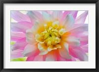 Framed Close-Up Of A Pastel Dahlia Flower