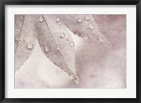 Framed Dew Drops On A Maple Leaf