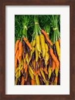 Framed Display Of Carrot Varieties