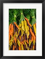 Framed Display Of Carrot Varieties