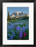 Framed Wildflowers And Mt Rainier At Mazama Ridge