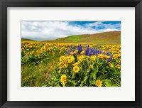 Framed Spring Wildflowers Cover The Meadows At Columbia Hills State Park