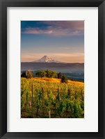 Framed Mt Hood From A Vineyard