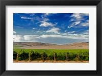 Framed Mattawa Vineyard On The Wahluke Slope