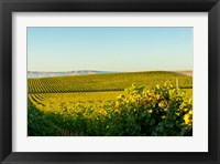 Framed Vineyard At Royal Slope, Washington State