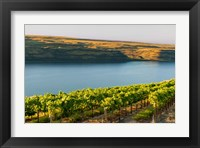 Framed Vineyard Overlooking The Columbia River