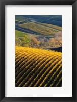 Framed Vineyards, Walla Walla, Washington State