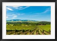 Framed Vineyard Landscape In Walla Walla