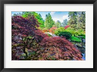 Framed Japanese Maple With Moon Bridge