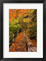 Framed Autumn Maple Leaves On A Bridge