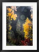Framed Sunshine On An Autumn Forest