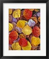 Framed Fallen Autumn Leaves