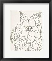 Framed Gardenia Line Drawing Crop