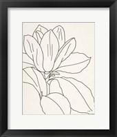 Framed Magnolia Line Drawing v2 Crop