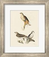 Framed Birds of Prey II